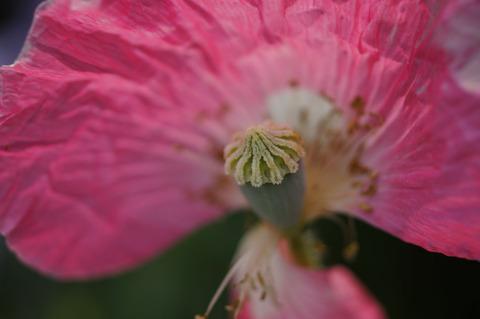 FLOWER_MACRO-2