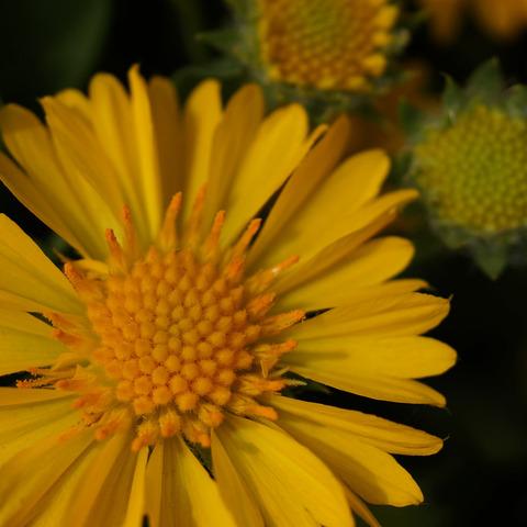 FLOWER_MACRO-5
