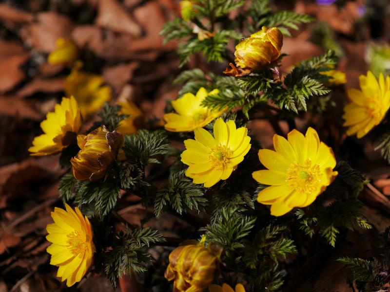 FLOWER_SPRING-5