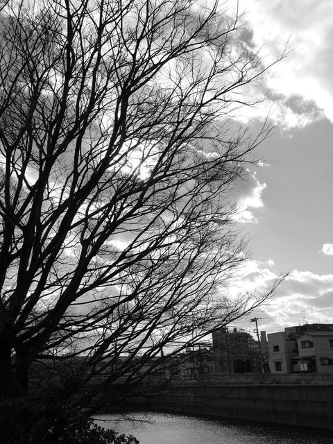 Fuyuno_Hizasiga_egaku-6
