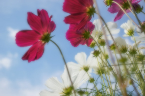 Botanical_garden-5