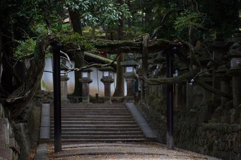 Kasuga_Taisha-3