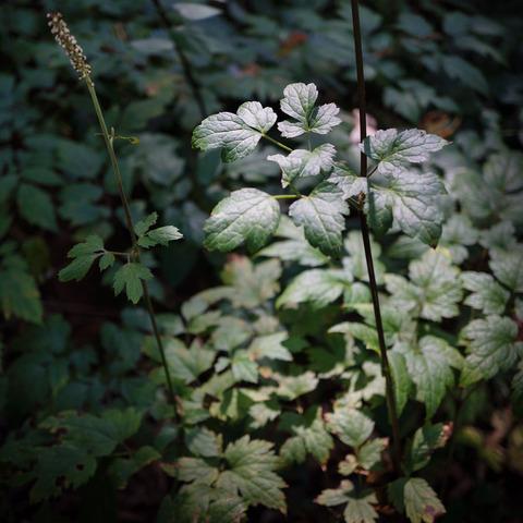 Botanical_garden-3
