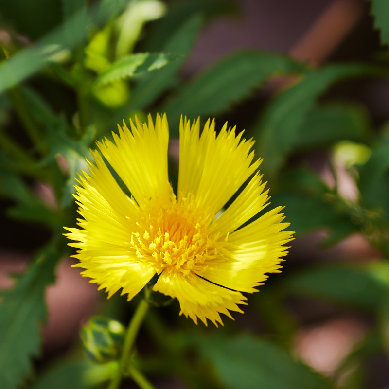 FLOWER_SPRING-7