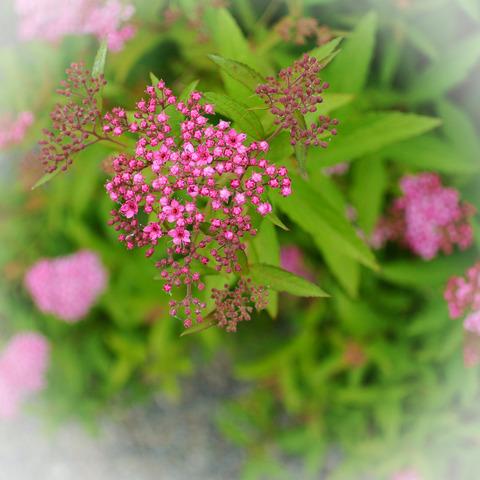 UMAMI_PLANTS-4