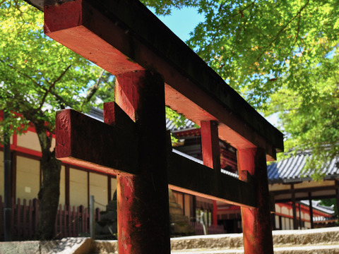 NIGATSUDO_TAMUKEYAMA-4693