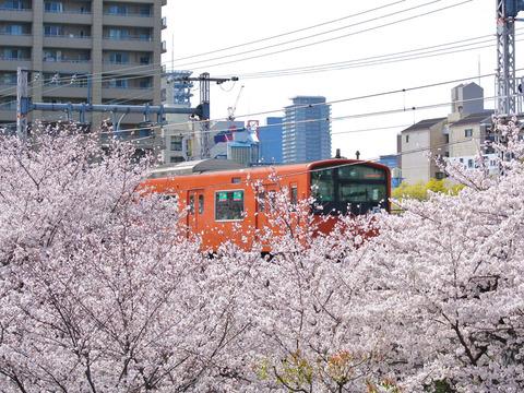 HANAMIRU_HITOTACHI-1