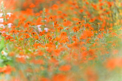 Botanical_garden-8