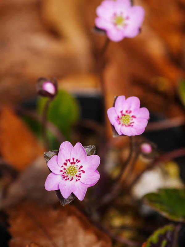 FLOWER_SPRING-4