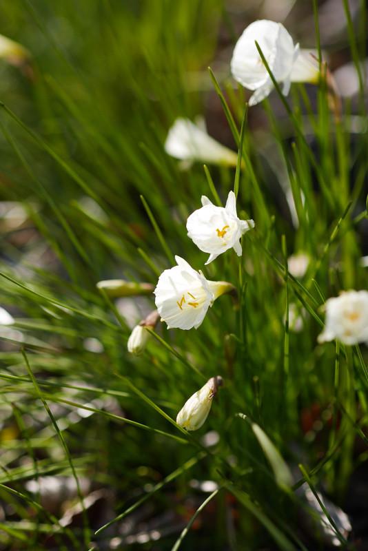 FLOWER_SPRING-3