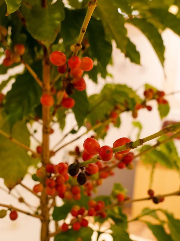 UESHIMA_COFFEE-8