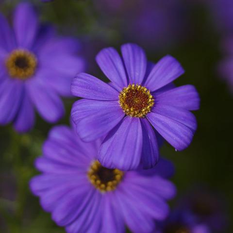 FLOWER_MACRO-6