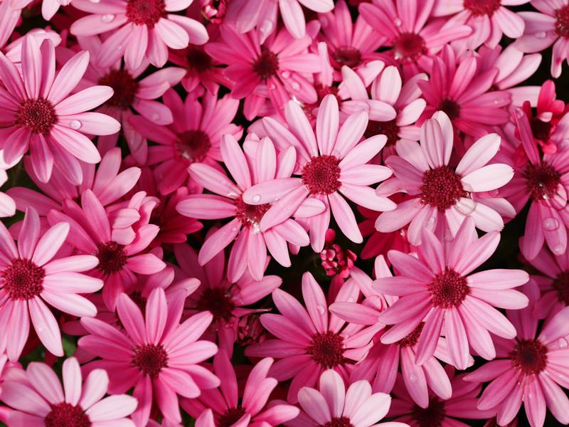 FLOWER_SPRING-1