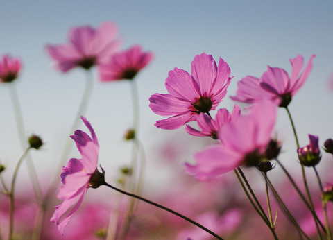 Asuka_flowers-7