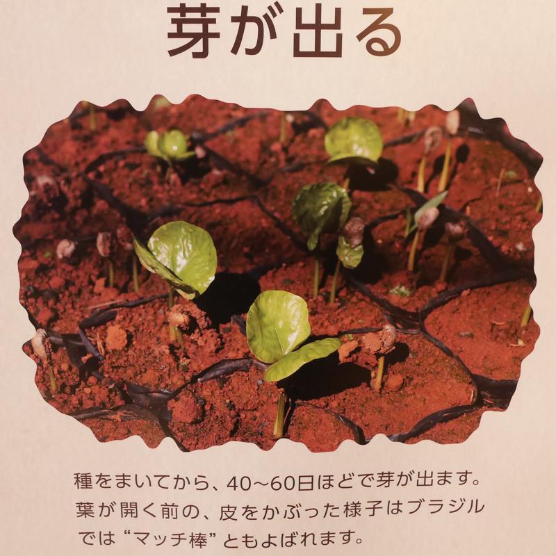 UESHIMA_COFFEE-10