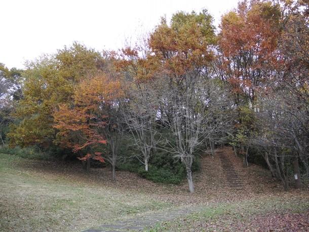 20101205_2_011