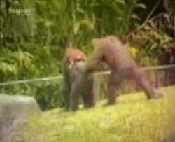 Funny Animals4