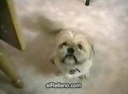 talkdog