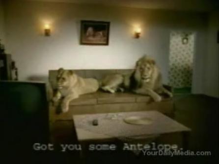 Lions_CM