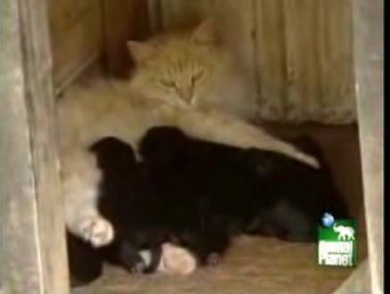 CatfeedingPuppies