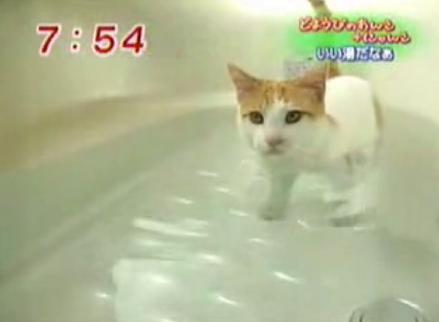 お風呂好き猫