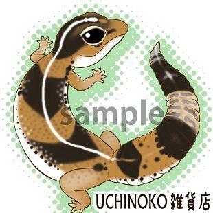 ニシアフリカトカゲモドキ001