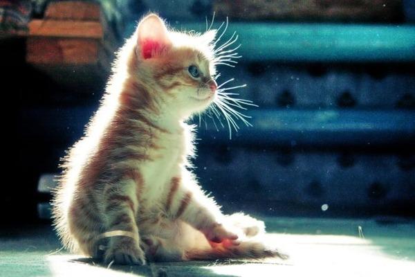 かわいい子猫画像337