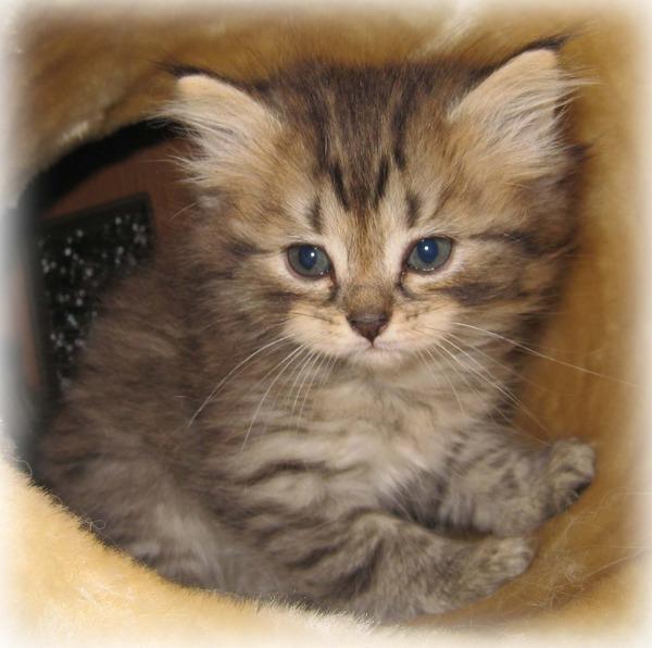 かわいい子猫画像39