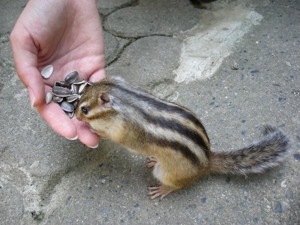 귀여운 다람쥐 20