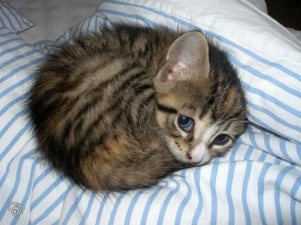 可愛い子猫画像20