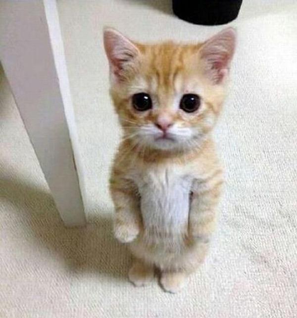 かわいい子猫画像356