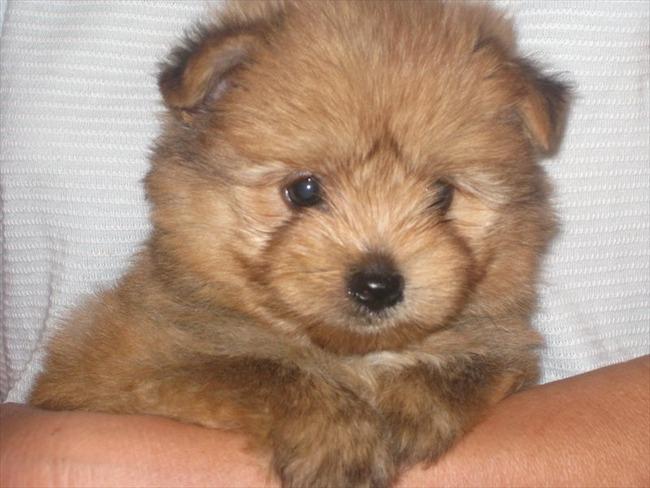 かわいい子犬画像91
