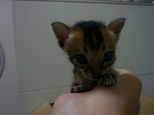子猫 保護11
