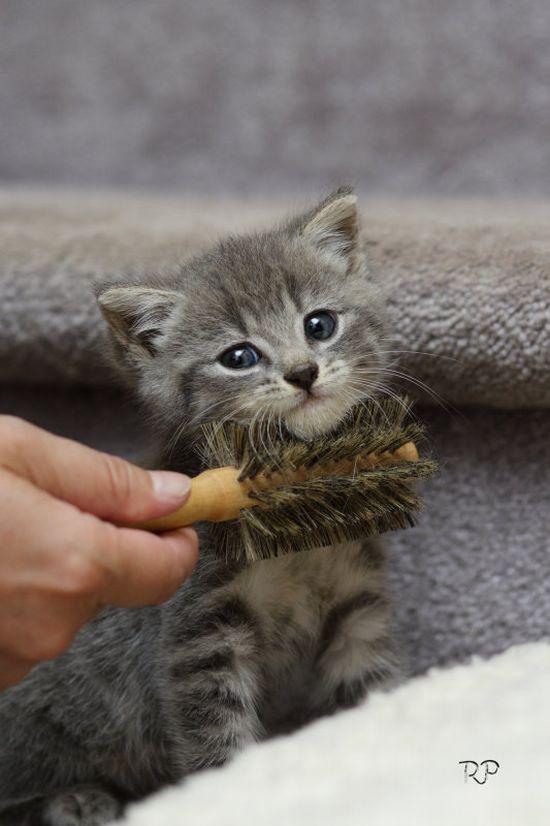かわいい子猫画像21