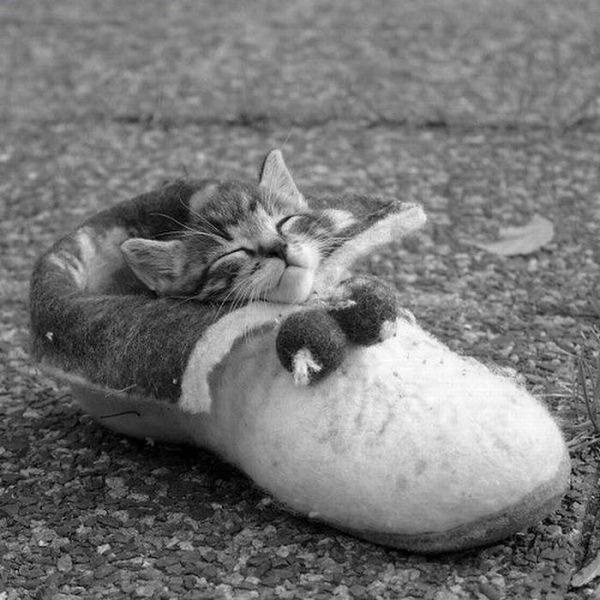可愛い子猫画像1
