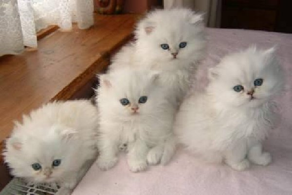 かわいい子猫画像323