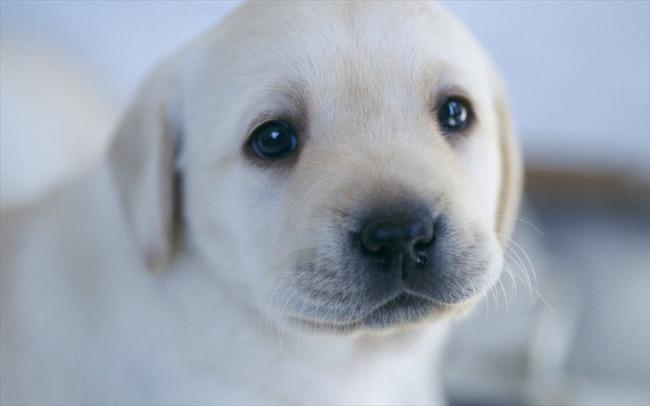 かわいい子犬画像9