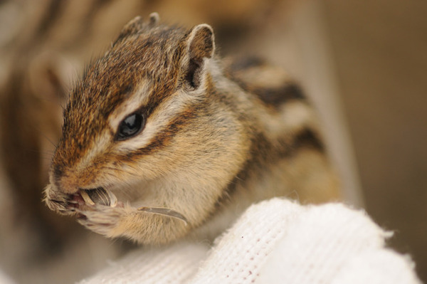 귀여운 다람쥐 11
