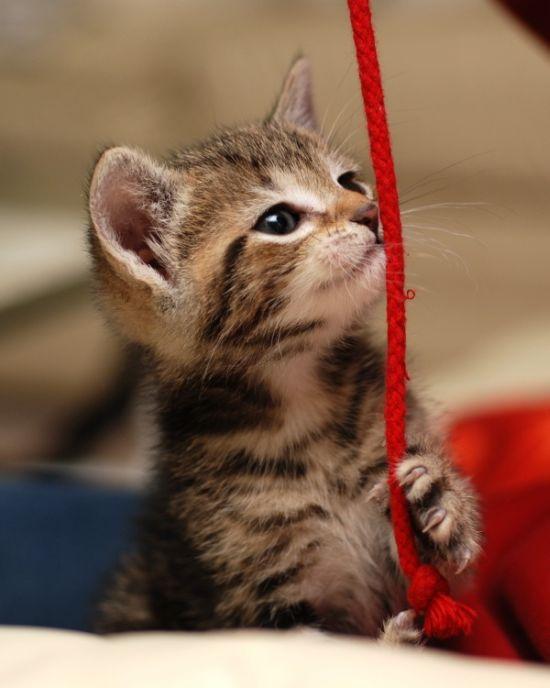 かわいい子猫画像22
