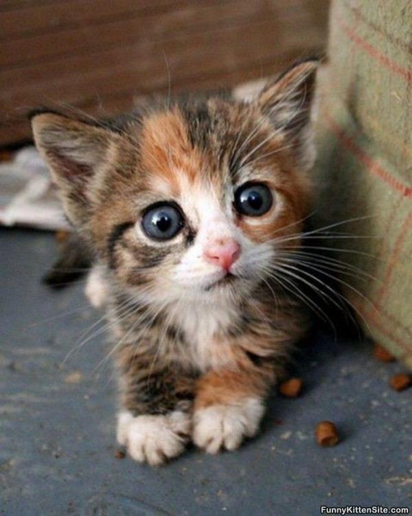 かわいい子猫画像37