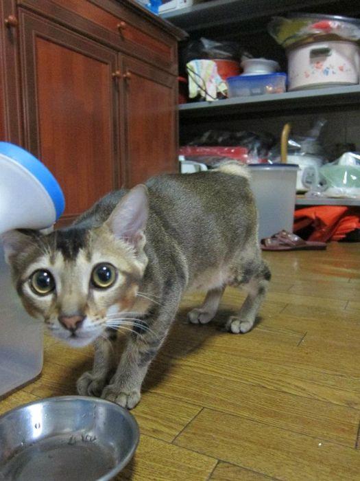 子猫 保護19