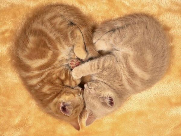 可愛い子猫画像42
