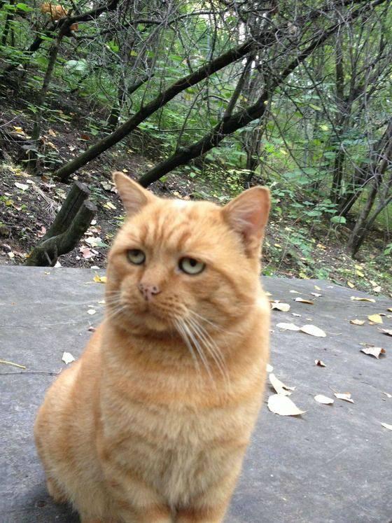 変顔 動物 犬 猫83