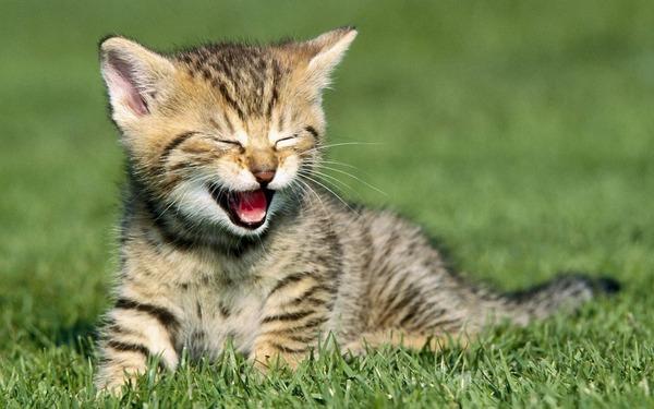 かわいい子猫画像327