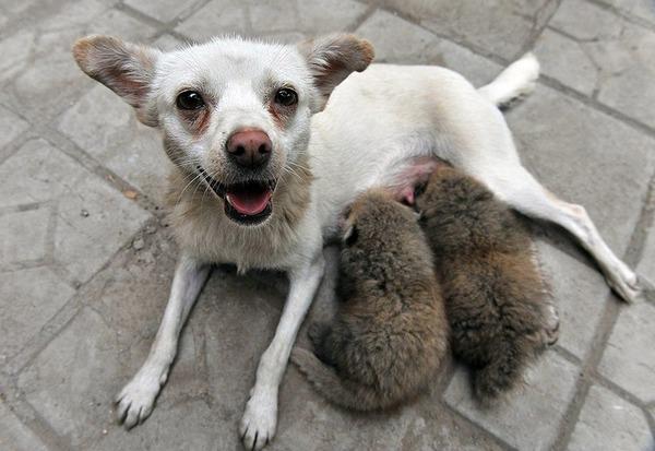 動物仲良し可愛い画像5