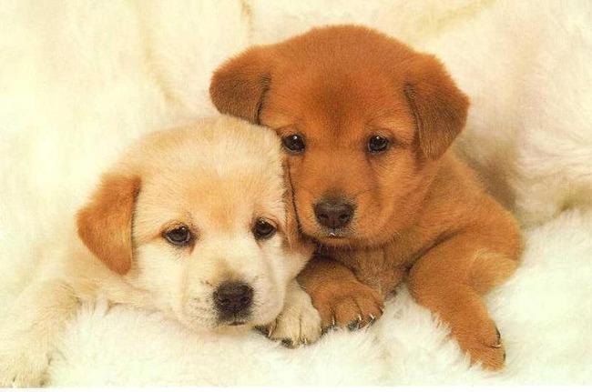 かわいい子犬画像110