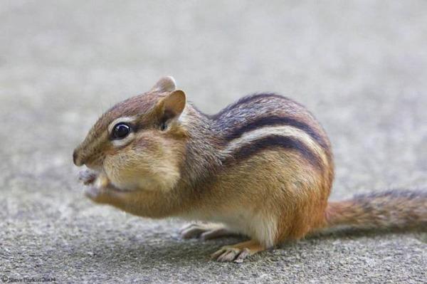 귀여운 다람쥐 57