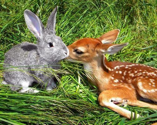動物 仲良し 画像2