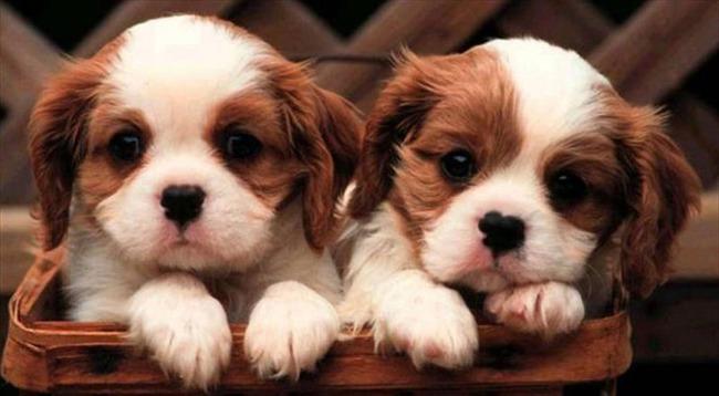 かわいい子犬画像105