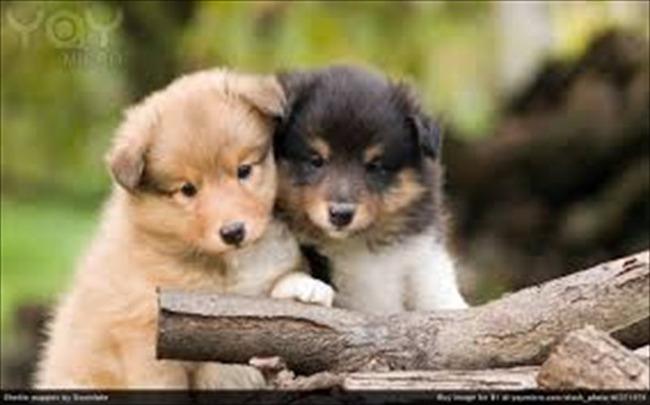 かわいい子犬画像84